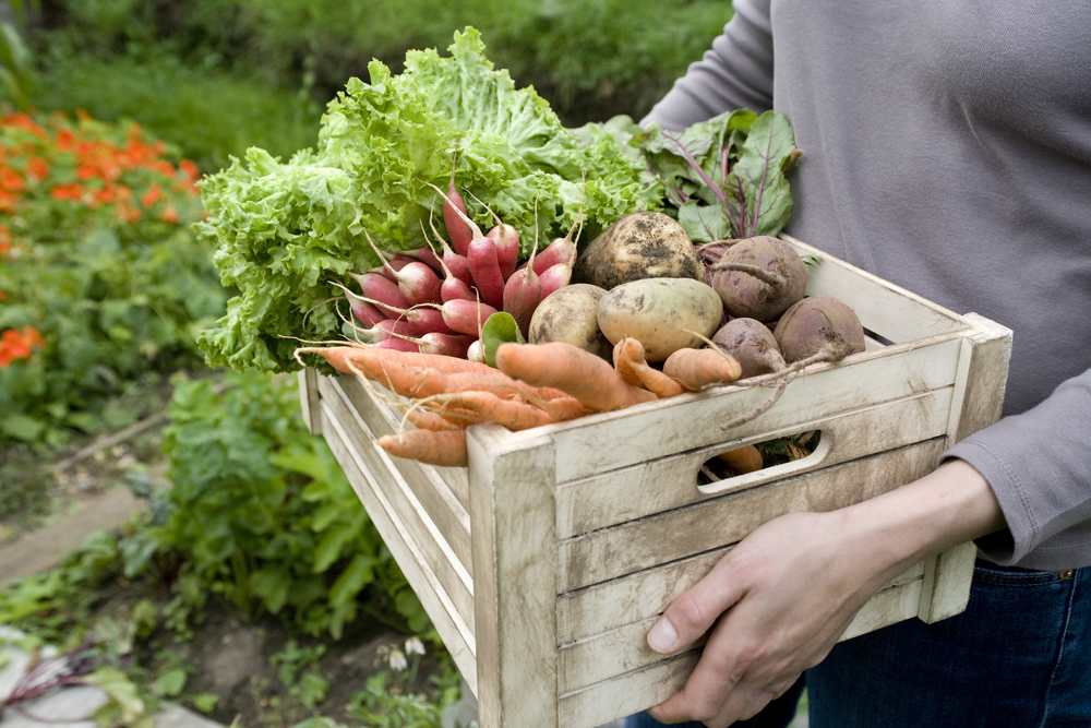 U.S. Schools Providing More Local Food