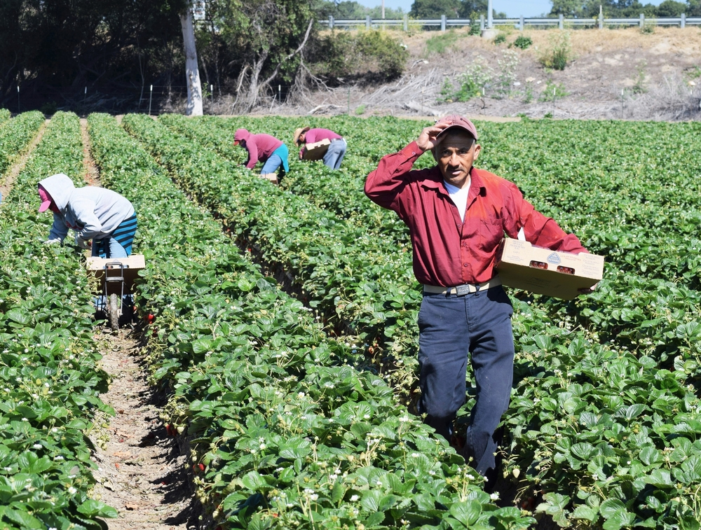 49 States Don't Pay Farm Workers Overtime