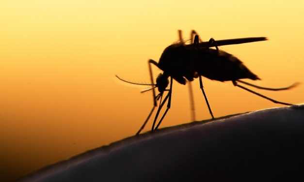 Scientists May have Discovered Malaria-Proof Mosquitoes